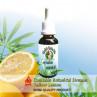 Merlin's Garden Mix Cannabis Botanical Dreams Yellow Lemon